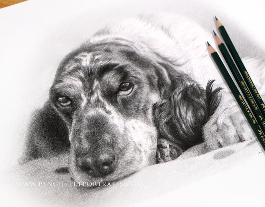 Pet Portraits in Pencil Gallery by Melanie Phillips