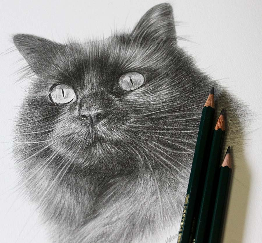 pencil drawing of a cat with my pencils