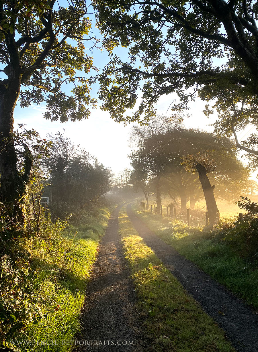 Morning misty Lane Walk