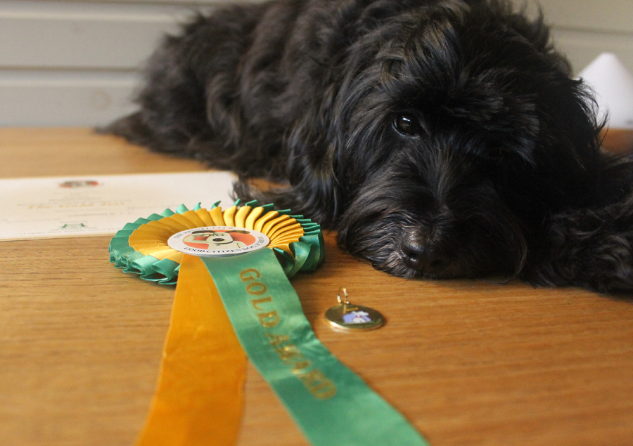 Lily with her rosettes