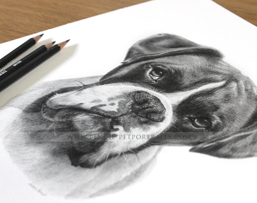 pencil portrait of boxer