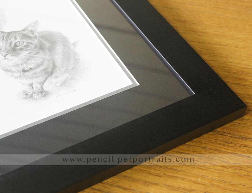 Cat Pencil Pet Portraits Montage by Melanie Phillips