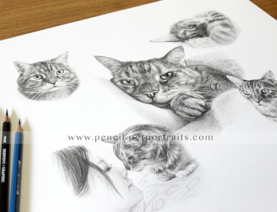 Cat Pencil Pet Portraits Framed