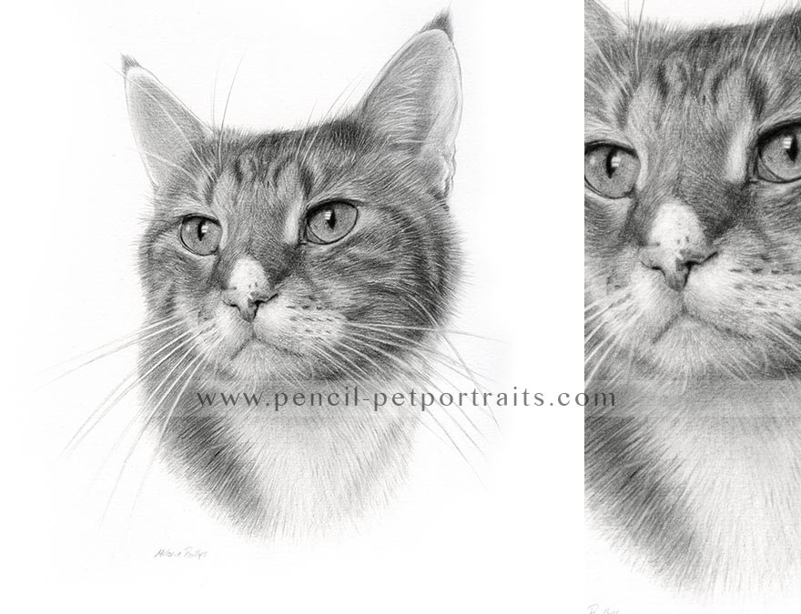 cat pet portrait