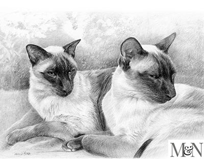 siamese cat pet portraits