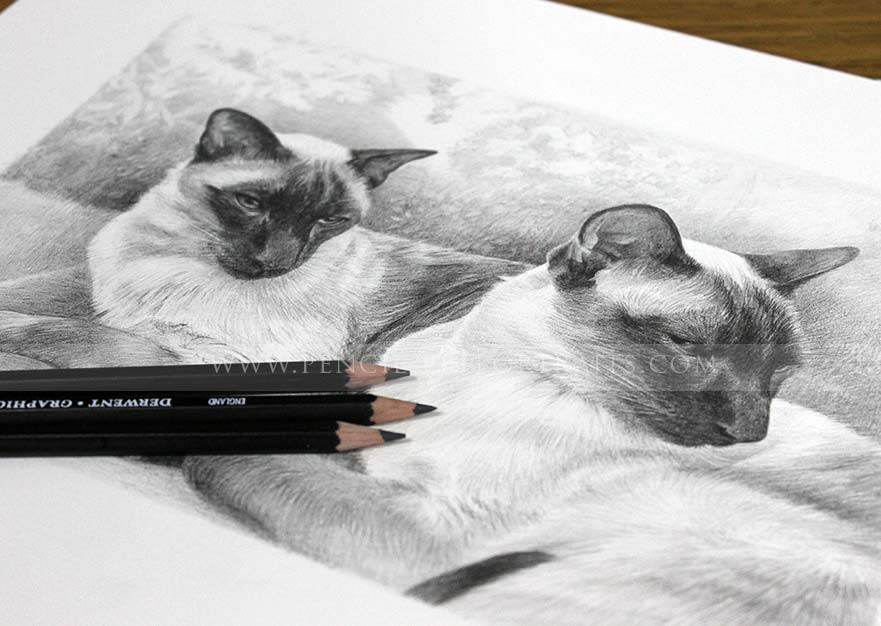 siamese portraits reference photos