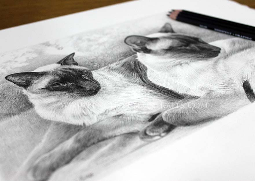 Siamese Cat Pet Portraits with pencil to show scale