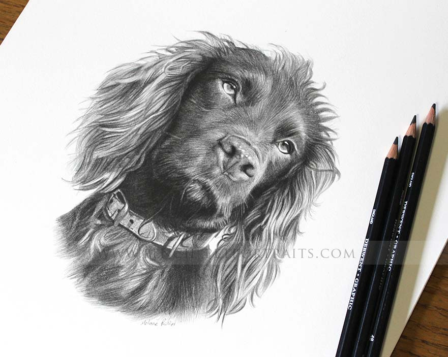 pencil pet portrait of Moo