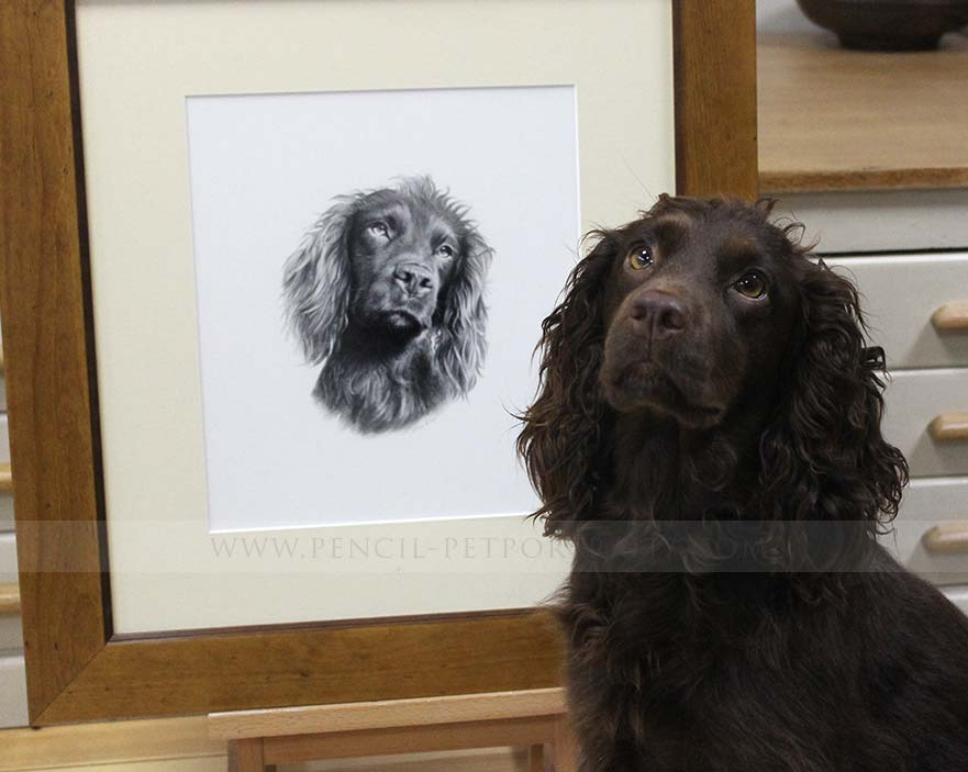 Cocker Spaniel Pet Portraits reference photo - dry ears