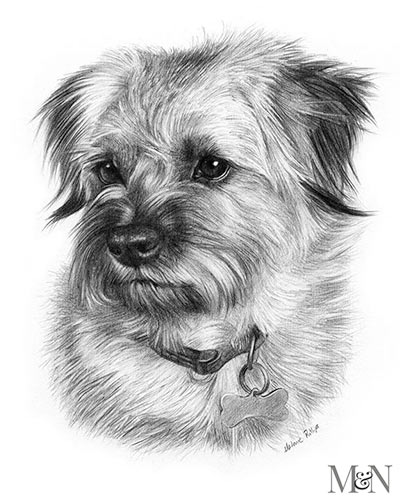 Pencil Pet Portraits Pet Portraits By Melanie Phillips