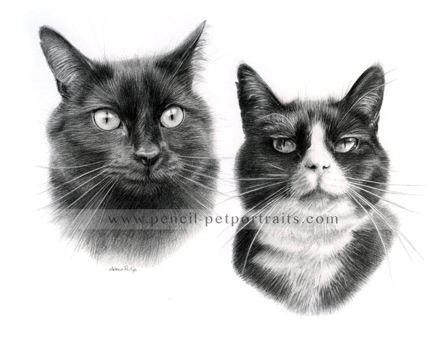 Double Cat Pet Portraits In Pencil By Melanie Phillips
