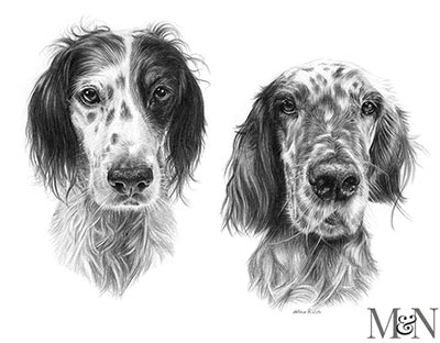 English Setter Pet  Portraits