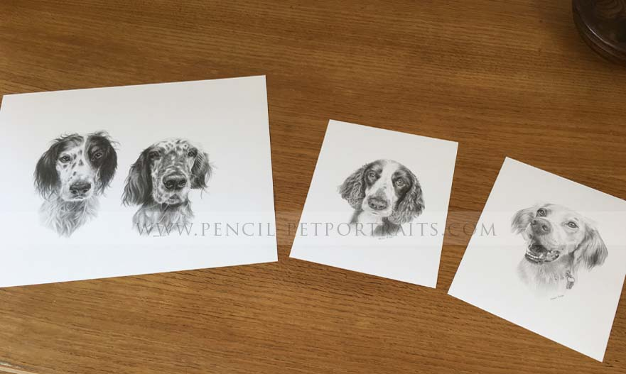 English Setter Portraits