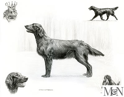 flat coated retriever pencil montage