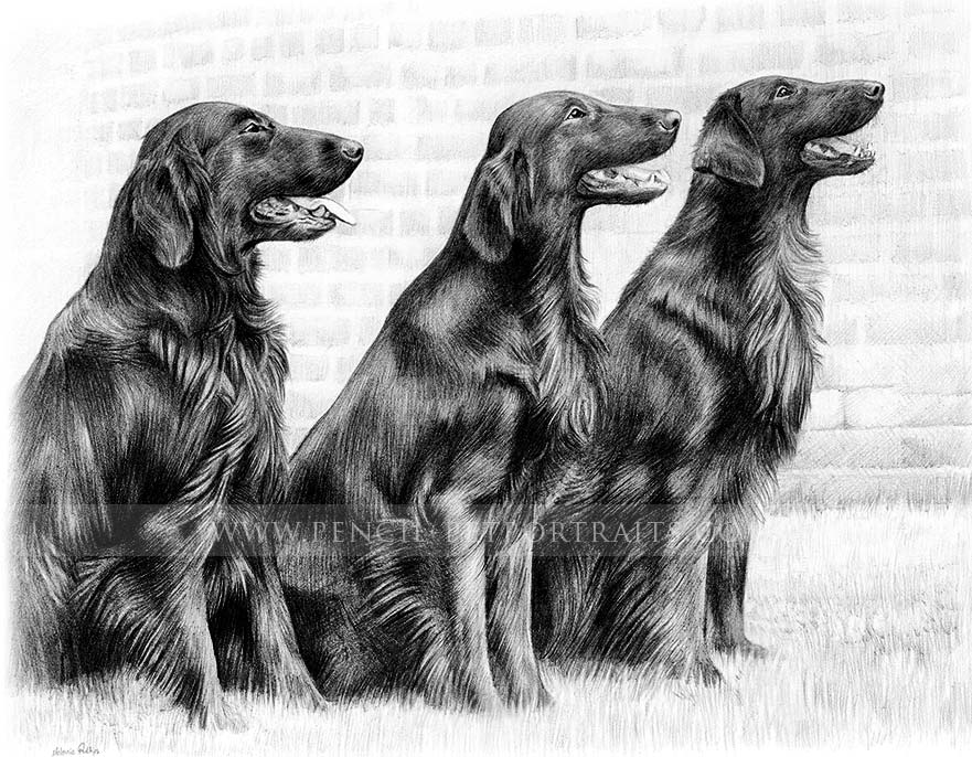 Flatcoat Retriever Pet Portraits