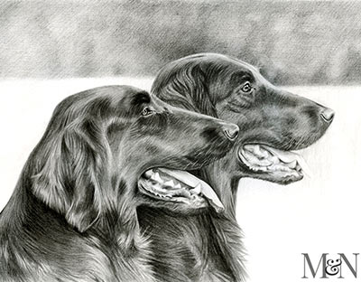 flat coated retrievers pet portraits