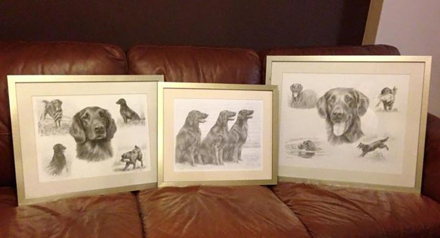 flatcoated retriever pet portraits in pencil framed