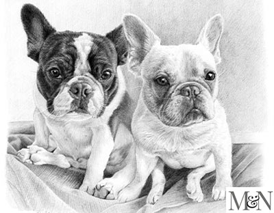 french bull dog portraits