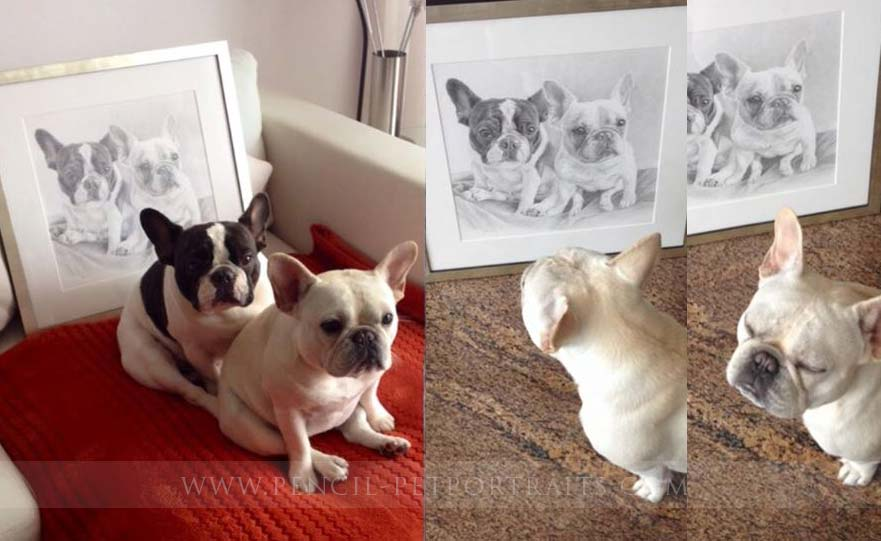 french bulldog pet portraits
