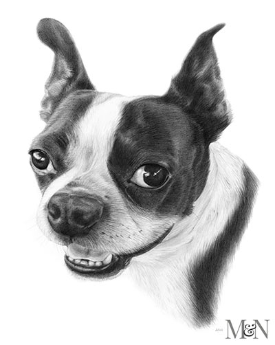 French Bull Dog Pencil Portraits