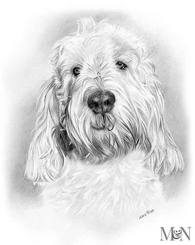 grand basset griffon vendeen portrait