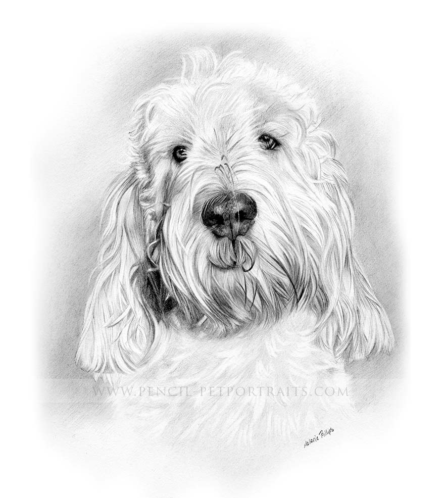 Grand Basset Griffon Vendeen Pet Portraits