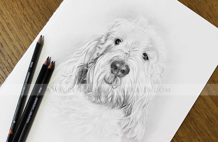 Grand Basset Griffon Vendeen pencil drawing