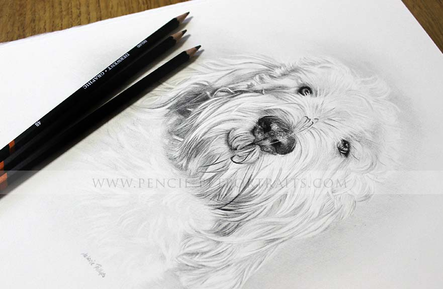 Grand Basset Griffon Vendeen pencil pet portrait