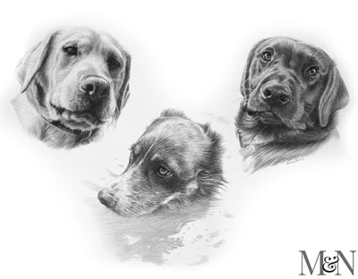 irish wolfhound pencil pet portraits
