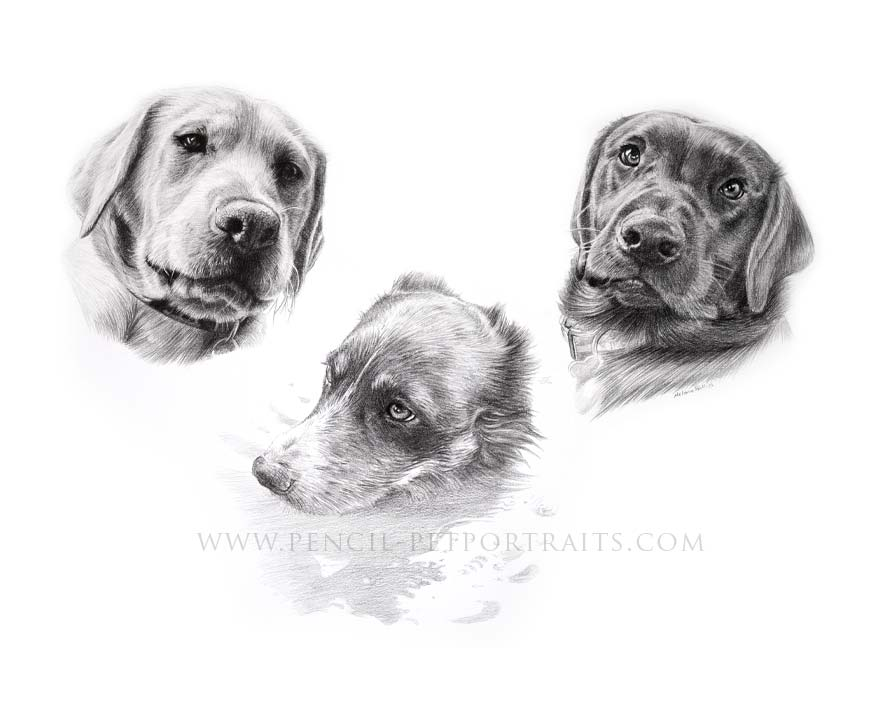 Irish Wolfhound pet portraits