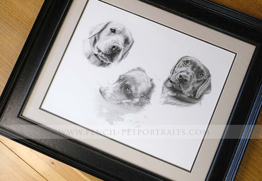 Irish Wolfhound pet portraits reference photo