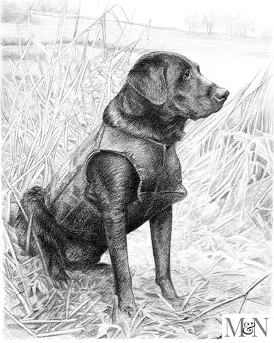labrador pet portraits