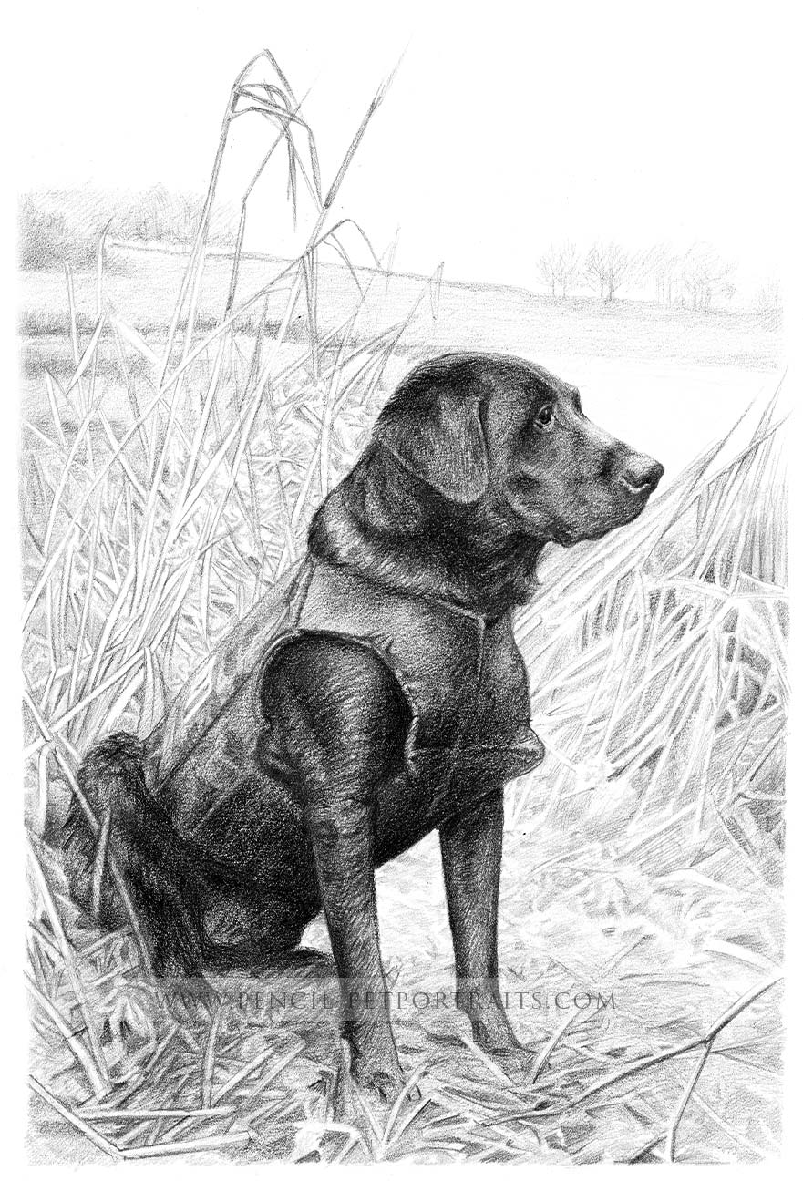 Gun Dog Retriever Pet Portraits
