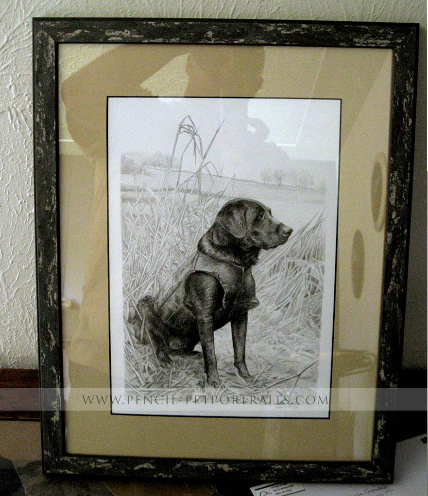 Gun Dog Retriever Pet Portraits photos