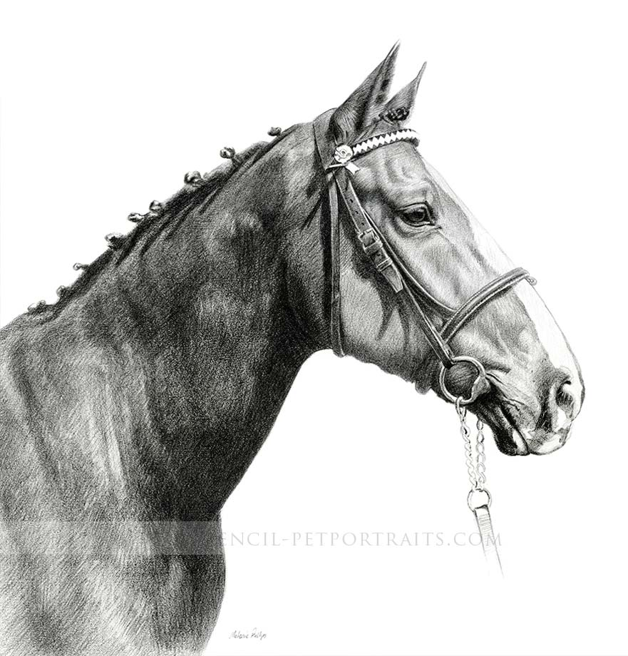 Retired Police Horse Pet Portraits