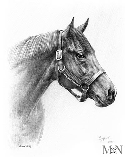 Horse Pencil Pet Portraits