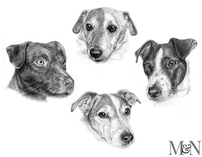 jack russell pencil portraits
