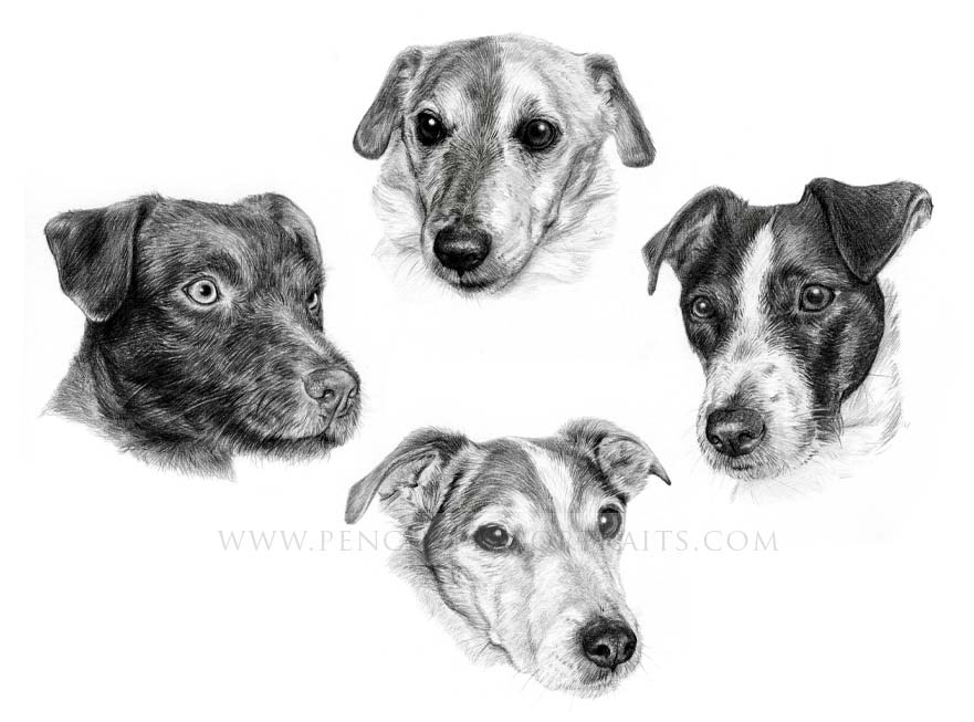 Jack Russell Pet Portraits