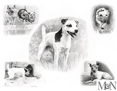 Pencil Montage Pet Portraits