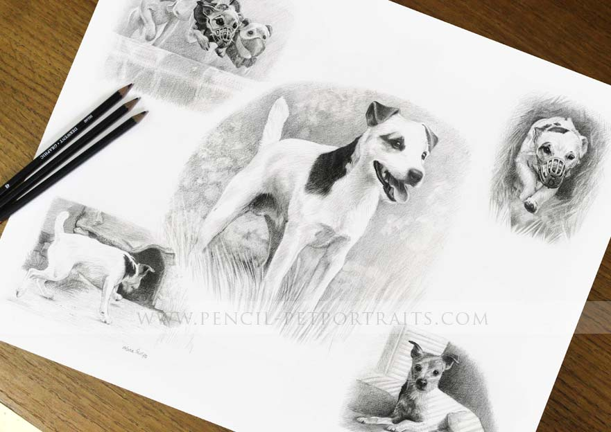 Jack Russell Pencil Pet Portraits Framed