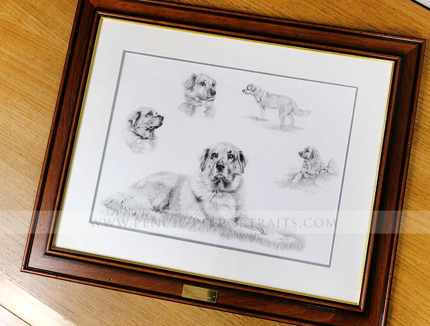 Golden Retriever Pet Portraits Framed