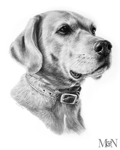 rhodesian ridgeback pencil pet portraits