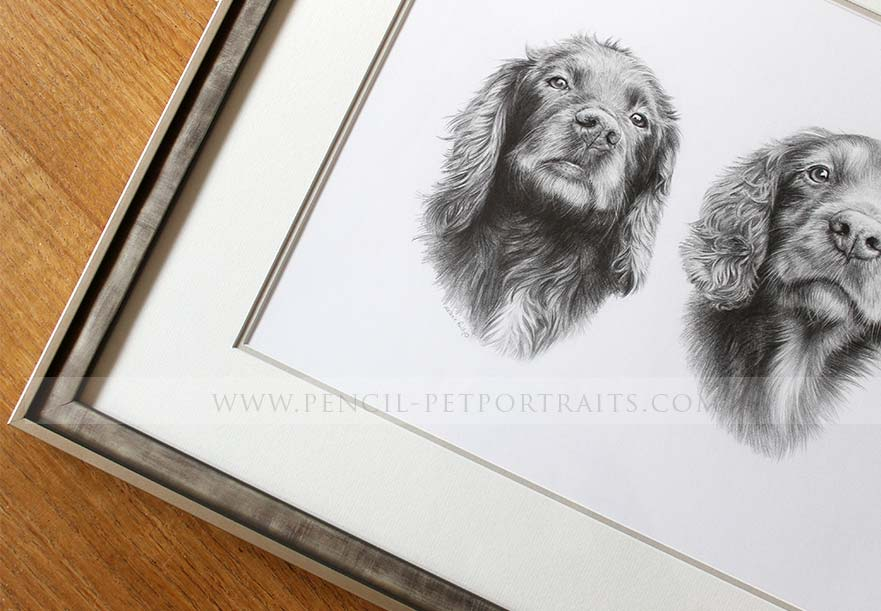 Springer Spaniel Pet Portraits Framed