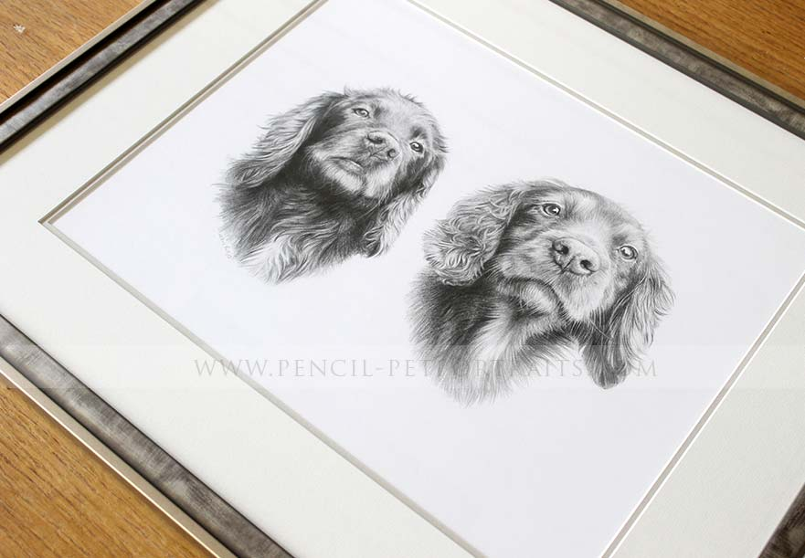 Springer Spaniel Portraits Framing