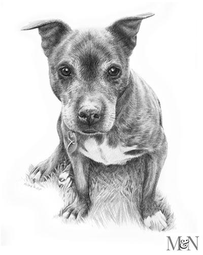 pencil pet portraits