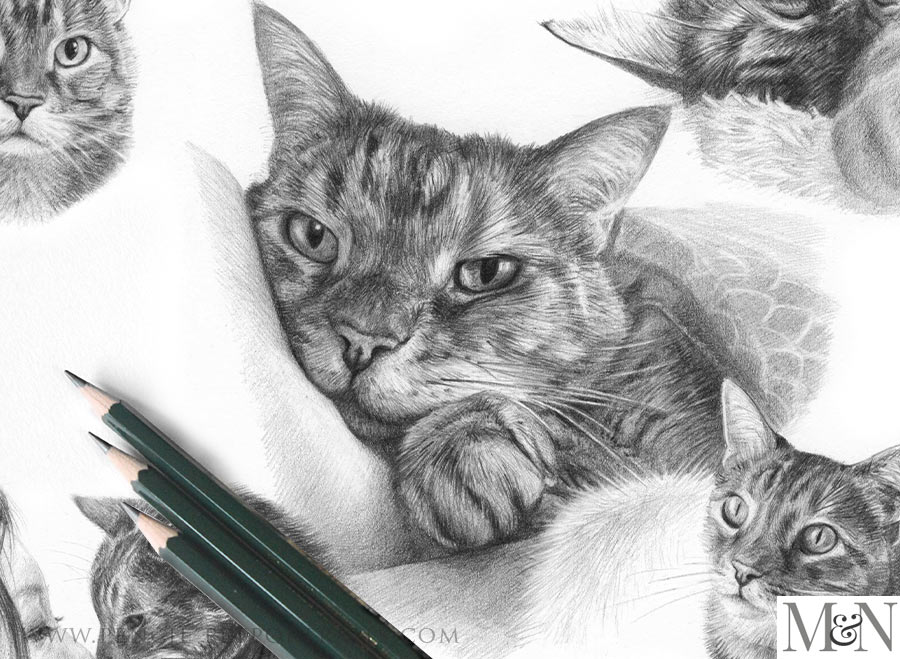 Pencil Portraits In Detail