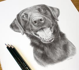Black Labrador Pencil Portraits