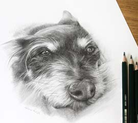 Dog Portraits Pencil