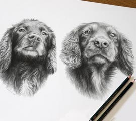 Spaniels Pencil Portrait